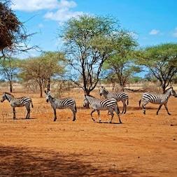Les Safaris Kenya - TUI