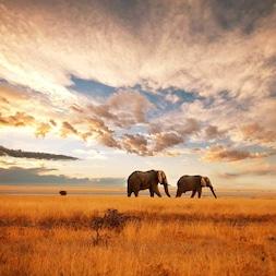Les Voyages Aventure Tanzanie - TUI