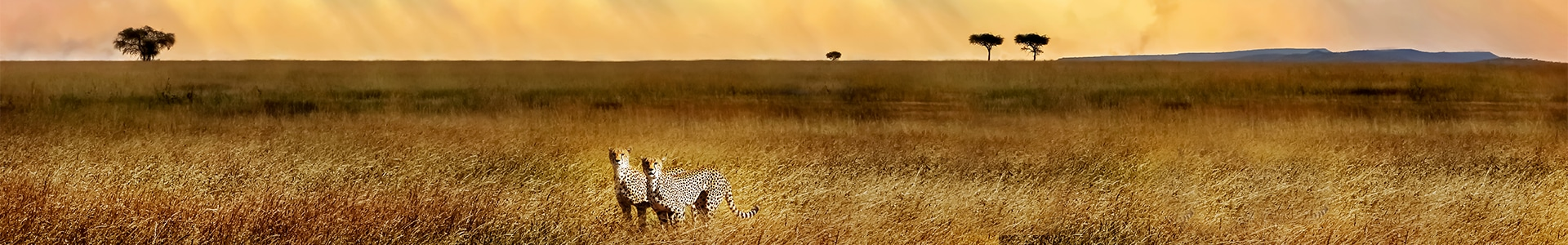Voyages en Afrique